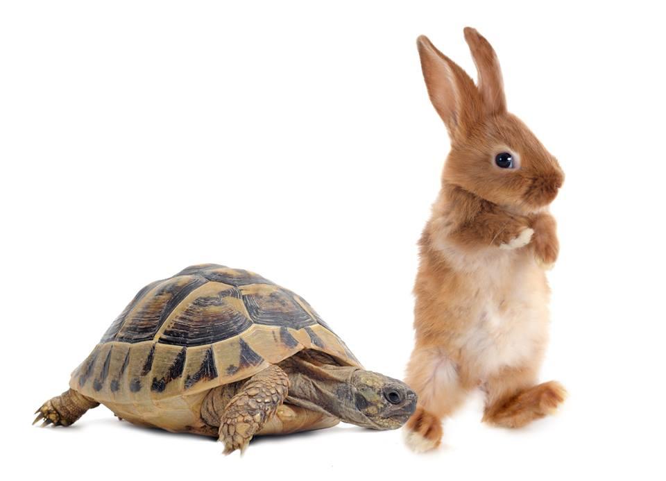 bunny in race