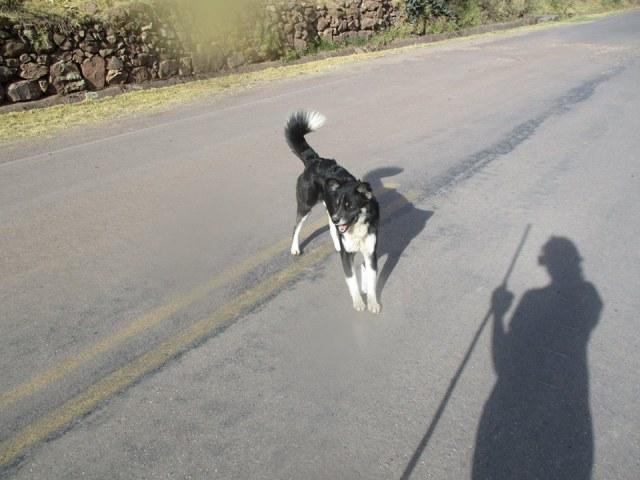 dog friend 3